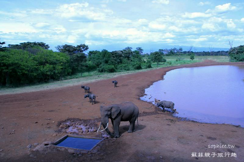 肯亞Kenya▍扭轉一生命運的樹頂飯店TREETOPS。住樹屋看動物!