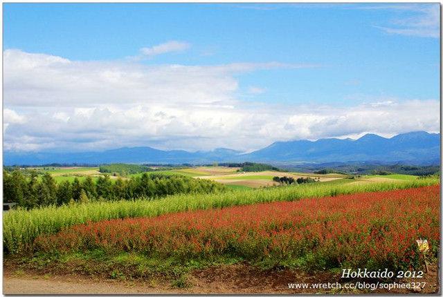【Hokkaido】美瑛。四季彩之丘