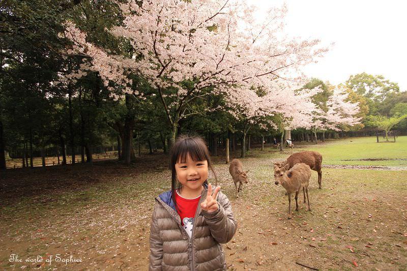 [關西。賞櫻]奈良公園、春日大社。漫步賞櫻玩鹿~