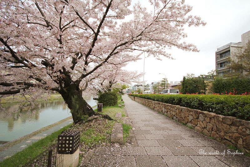 [京都。賞櫻]在日本騎單車的相關注意事項。到京都就騎自行車吧!