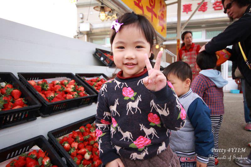 [4Y11M]苗栗大湖。三輪車草莓園-冬天就是要採草莓啊~