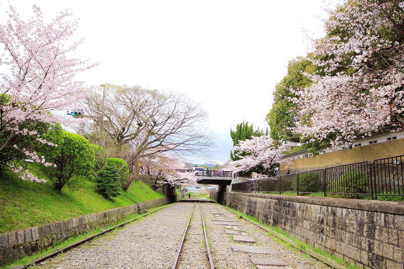 [京都。賞櫻]蹴上鐵道。琵琶湖疏水。最佳浪漫約會賞櫻處~