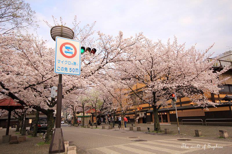 [京都。賞櫻]祇園白川。藝妓出沒的百年町屋!(含夜櫻)